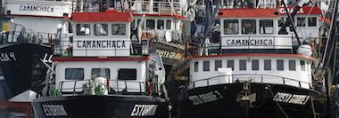 camanchaca-seafood-suppliers