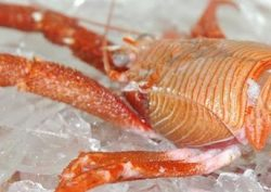 langostino-lobster-tails