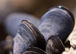 mussels-whole-and-retail