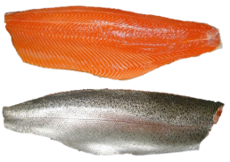 trout-fillet-seafood-supplier