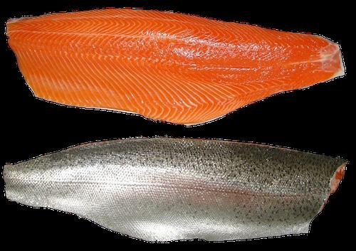 trout-fillet-seafood-supplier