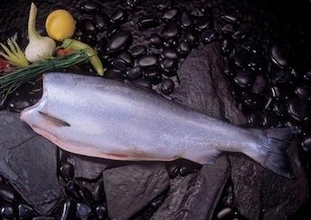 fresh-salmon-fillets